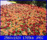 i fiori di Valentina-tulip-119-jpg