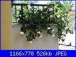 i fiori di Valentina-rosa-002-jpg