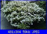 i fiori di Valentina-azac00098-jpg