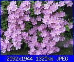 Pianta per pergolato-img_1675-jpg