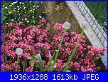 il giardino di ciana-immagini-061-jpg