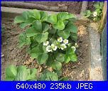 il giardino di ciana-immagini-021-jpg