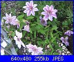 Il giardinetto di Kalè-img_0324-jpg