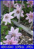 Il giardinetto di Kalè-img_0308-jpg