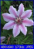 Il giardinetto di Kalè-img_0323-jpg