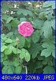 Il giardinetto di Kalè-img_0310-jpg