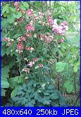 Il giardinetto di Kalè-img_0311-jpg