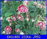 Il giardinetto di Kalè-img_0312-jpg