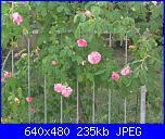 Il giardinetto di Kalè-img_0325-jpg