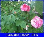 Il giardinetto di Kalè-img_0319-jpg