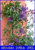Il giardinetto di Kalè-img_0327-jpg