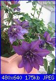 Il giardinetto di Kalè-img_0329-jpg