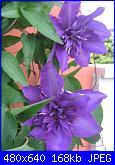 Il giardinetto di Kalè-img_0328-jpg
