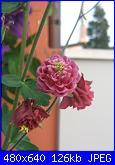 Il giardinetto di Kalè-img_0331-jpg