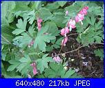 Il giardinetto di Kalè-img_0314-jpg