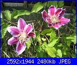 I fiori di Eli75-img_3152-jpg