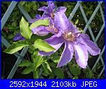 I fiori di Eli75-img_3153-jpg
