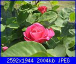 I fiori di Eli75-img_3155-jpg