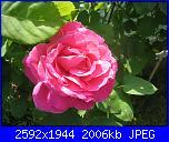 I fiori di Eli75-img_3156-jpg