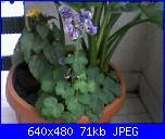 E' primavera-fotografie-0067-jpg