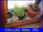 Le piante di Malù-100_0436-jpg