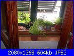 Le piante di Malù-100_0439-jpg