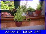 Le piante di Malù-100_0440-jpg