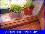 Le piante di Malù-100_0442-jpg