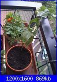 Le piante di Malù-tagete-e-zinnia-jpg