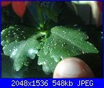 vermi sull piante-01062011174-jpg