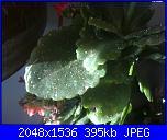 vermi sull piante-01062011172-jpg