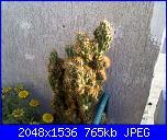 le mie piante grasse-02062011175-jpg