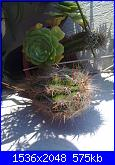 le mie piante grasse-02062011177-jpg