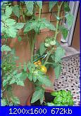 Orto in vaso..e' possibile!!-img_0528-jpg