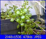 piante verdi-31072011231-jpg