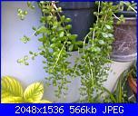 piante verdi-31072011232-jpg