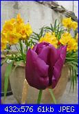 i miei tulipani-img_2142-jpg