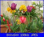 i miei tulipani-img_2216-jpg