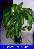 Aiuto....le mie piante si stanno SUICIDANDO!!-images-jpg