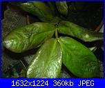 pianta ziama pericolo ke muore-dsc01416-jpg