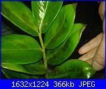 pianta ziama pericolo ke muore-dsc01417-jpg