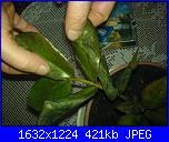 pianta ziama pericolo ke muore-dsc01418-jpg