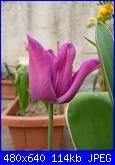 i miei tulipani-p1010594-jpg