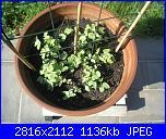 Girotondo di semi diventano piantine-001-jpg