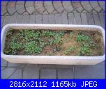 Girotondo di semi diventano piantine-002-jpg