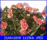 Il mio angolo fiorito! (Giusy)-pa300490-jpg