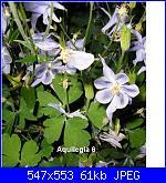 Regalo semi piante da fiore per i vostri giardini!!!-aquilegia-6-jpg
