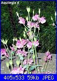 Regalo semi piante da fiore per i vostri giardini!!!-aquilegia-4-jpg