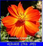 Regalo semi piante da fiore per i vostri giardini!!!-fiore-arancio-non-so-il-nome-jpg