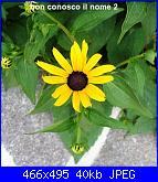 Regalo semi piante da fiore per i vostri giardini!!!-fiore-giallo-non-so-il-nome-jpg